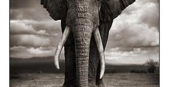 Nick Brandt: Wildlife Photography