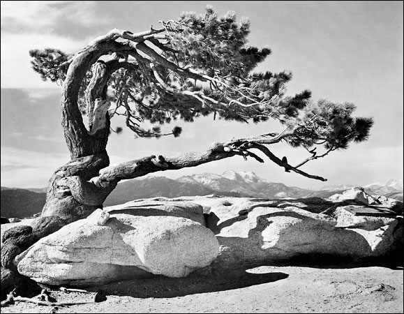 Ansel Adams was an American photographer and environmentalist known for