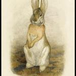 Beatrix Potter2