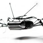 Insecto-Andrea-Petrachi